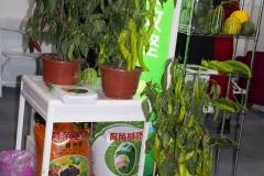 2018 Oct 18 - Beijing Seed Congress by SWL (16)