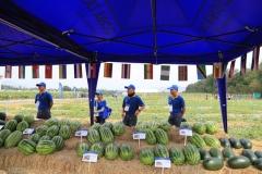 2019 Jan - Chiatai Field Day (12)