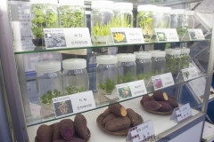 2018 Oct 23 - Korea Seed Expo by SWL (47)