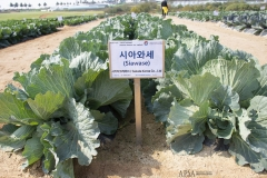 2018 Oct 23 - Korea Seed Expo by SWL (78)