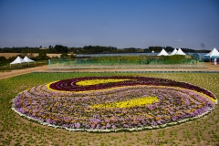 2018 Oct 23 - Korea Seed Expo by SWL (80)