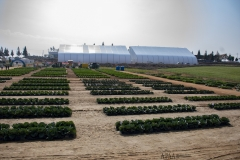 2018 Oct 23 - Korea Seed Expo by SWL (81)