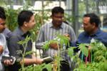 greenhouse 13