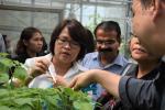 greenhouse 19