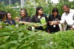 greenhouse 9